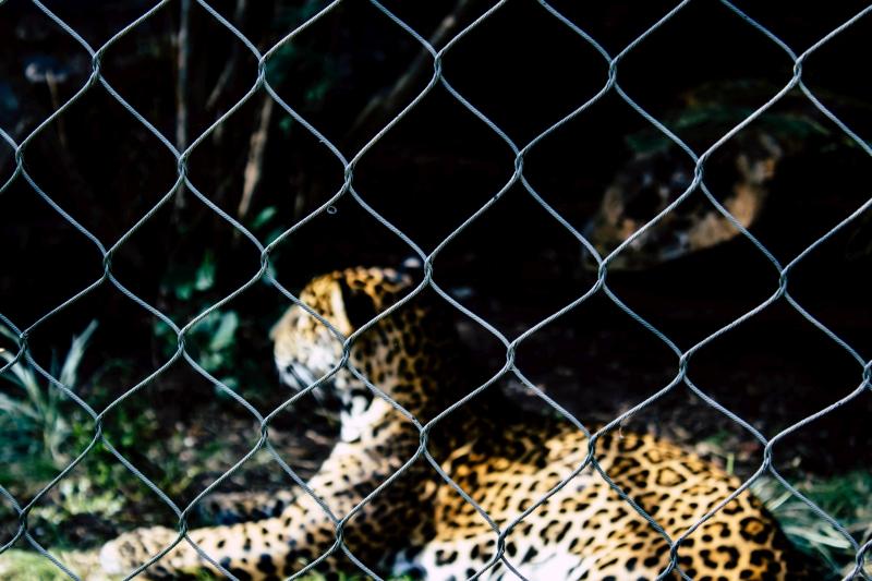 Руководство EAZA по использованию животных в демонстрациях для публики
