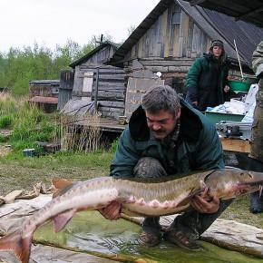 Сохранение наиболее редких осетровых рыб Евразии