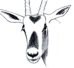 Содержание и разведение млекопитающих редких видов в зоопарках и питомниках
