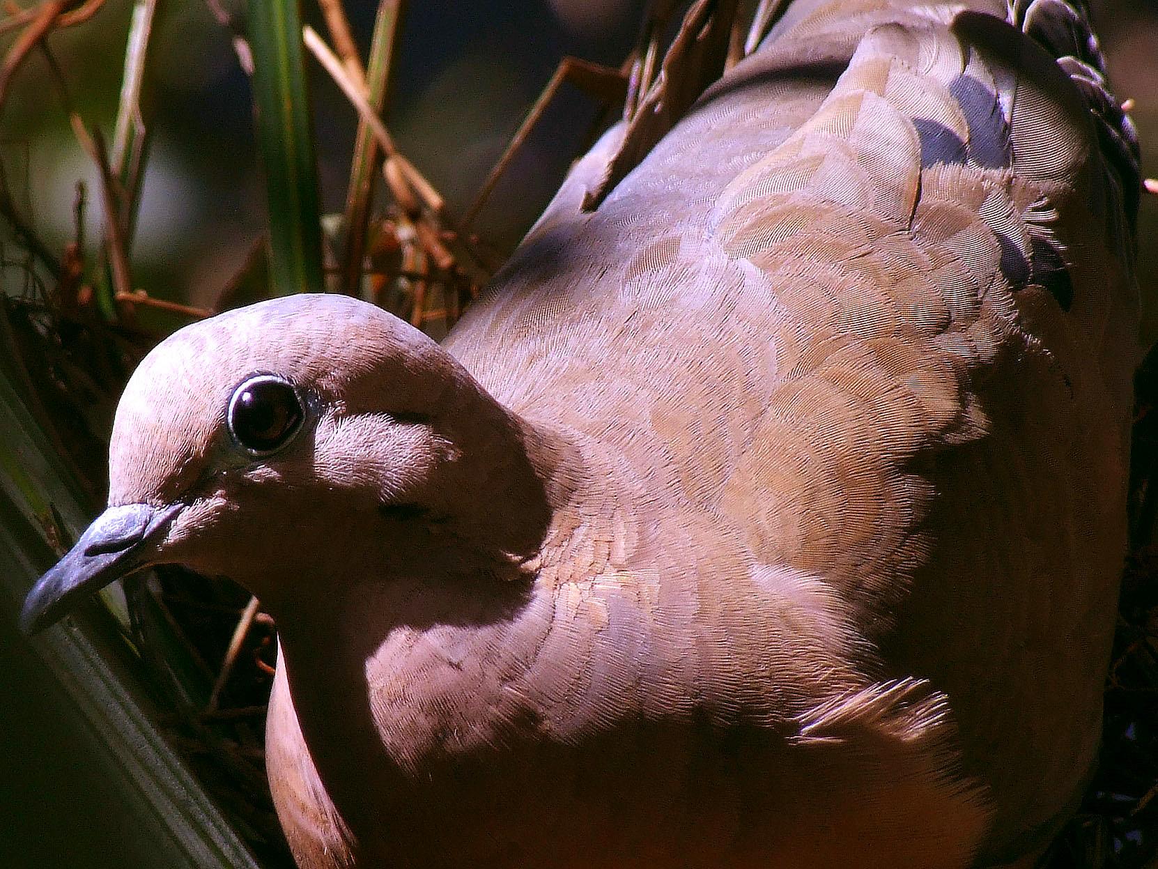 Птицы: содержание, разведение, ветеринария