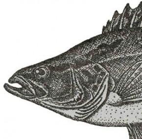 Проблемы аквакультуры