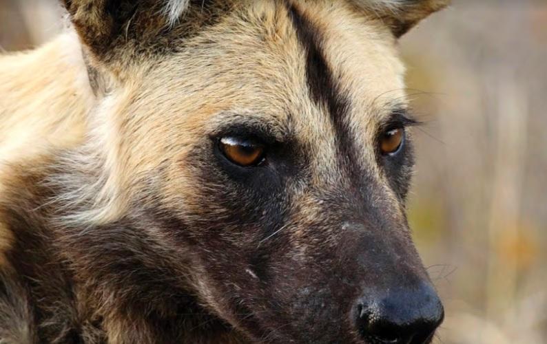 Забота о диких животных. Стратегия WAZA