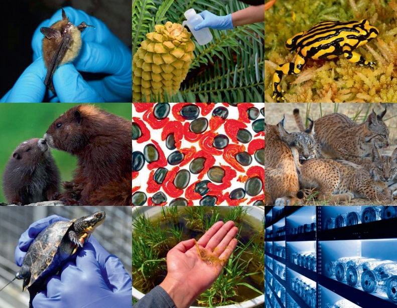 Руководство по использованию программ управления популяциями ex-situ для сохранения видов