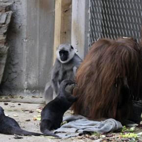 Совместное содержание как обогащение поведения  в зоопарке