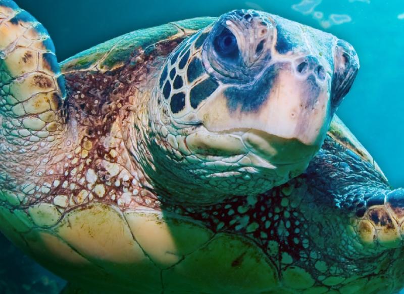 Природоохранная стратегия всемирного сообщества зоопарков и аквариумов