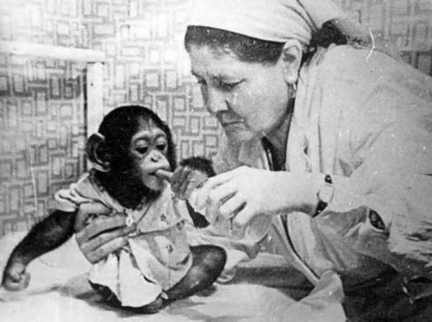 Зоопарки во время Второй мировой войны